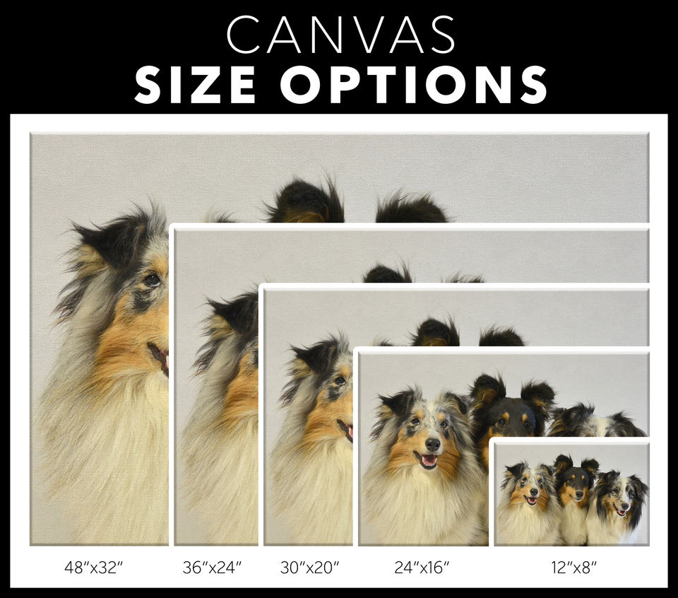 Shetland Sheepdogs Canvas Wall Art