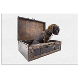 Puppy In A Suitcase Canvas Wall Art