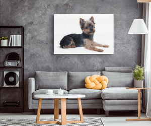 Yorkshire Terrier Canvas Wall Art