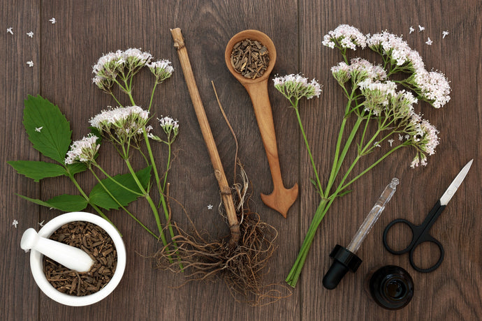 Know how Valerian Root helps you relax & sleep