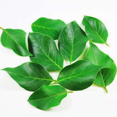 Organic Bay Leaves (Hoja de Laurel) - Dosner Organics Farms