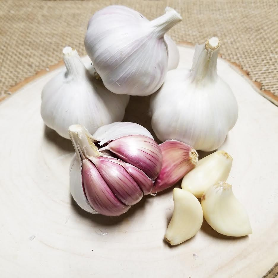 Organic Purple Garlic - Dosner Organics Farms