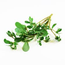Load image into Gallery viewer, Organic Purslane (Verdolaga) - Dosner Organics Farms