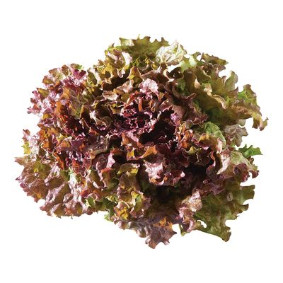 Lettuce, Red Leaf ea.