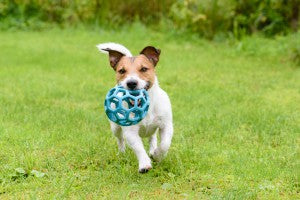 Protect Pets from the Summer Heat