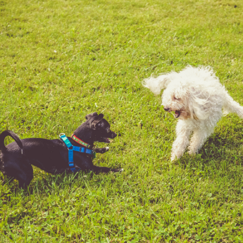Top Dog Parks in Saginaw and Haslet