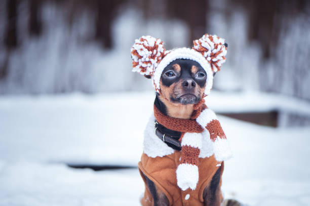 Keeping your Pet Healthy this Winter, Naturally