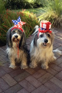 July 4th Pet Safety Tips: Fireworks
