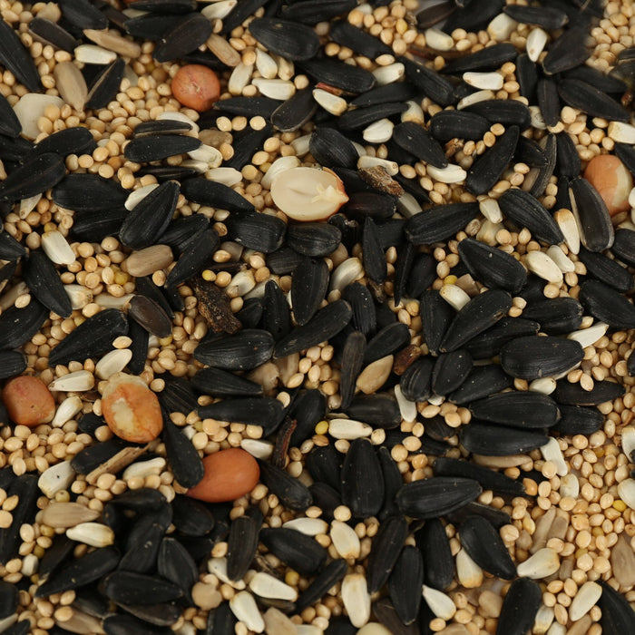 Birds of a Feather Songbird Seeds, Nuts and Fruits 5lb