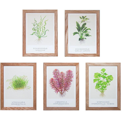 Tropica art cards sets with aquarium plants - Wet Habitat