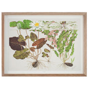 Tropica art posters with aquarium plants - Wet Habitat