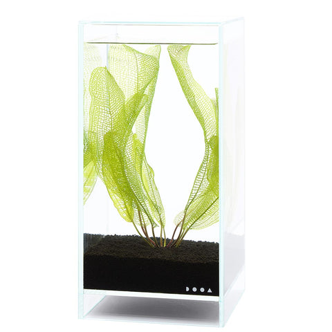 DOOA Neo Glass Air A - Wet Habitat