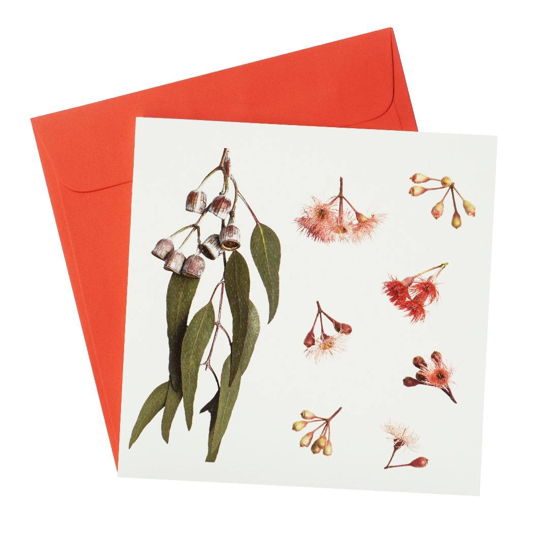 Australian Native Flora Greeting Card