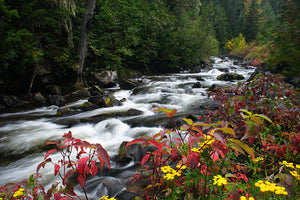 Fall folliage on Granite Creek