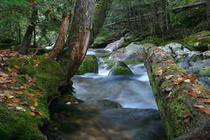 Fall on the Moss Hunt Creek