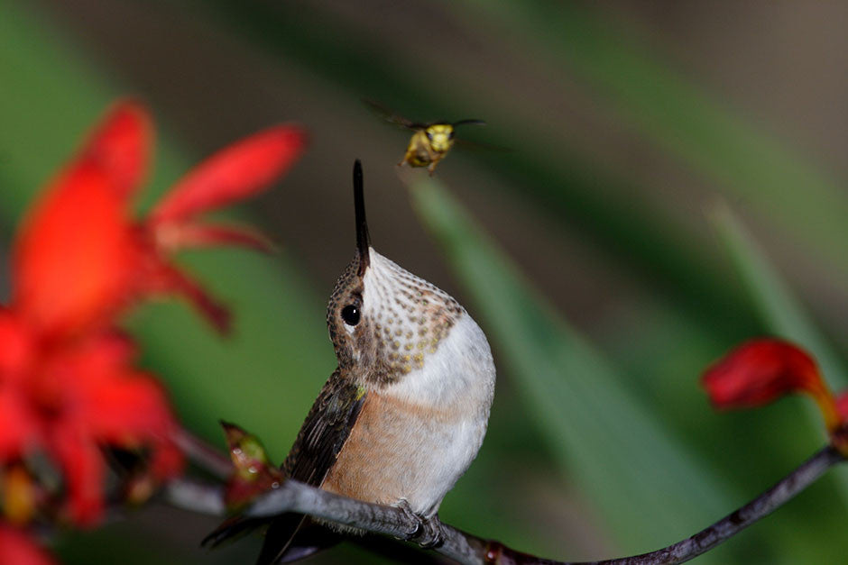 Hummer and the Bee