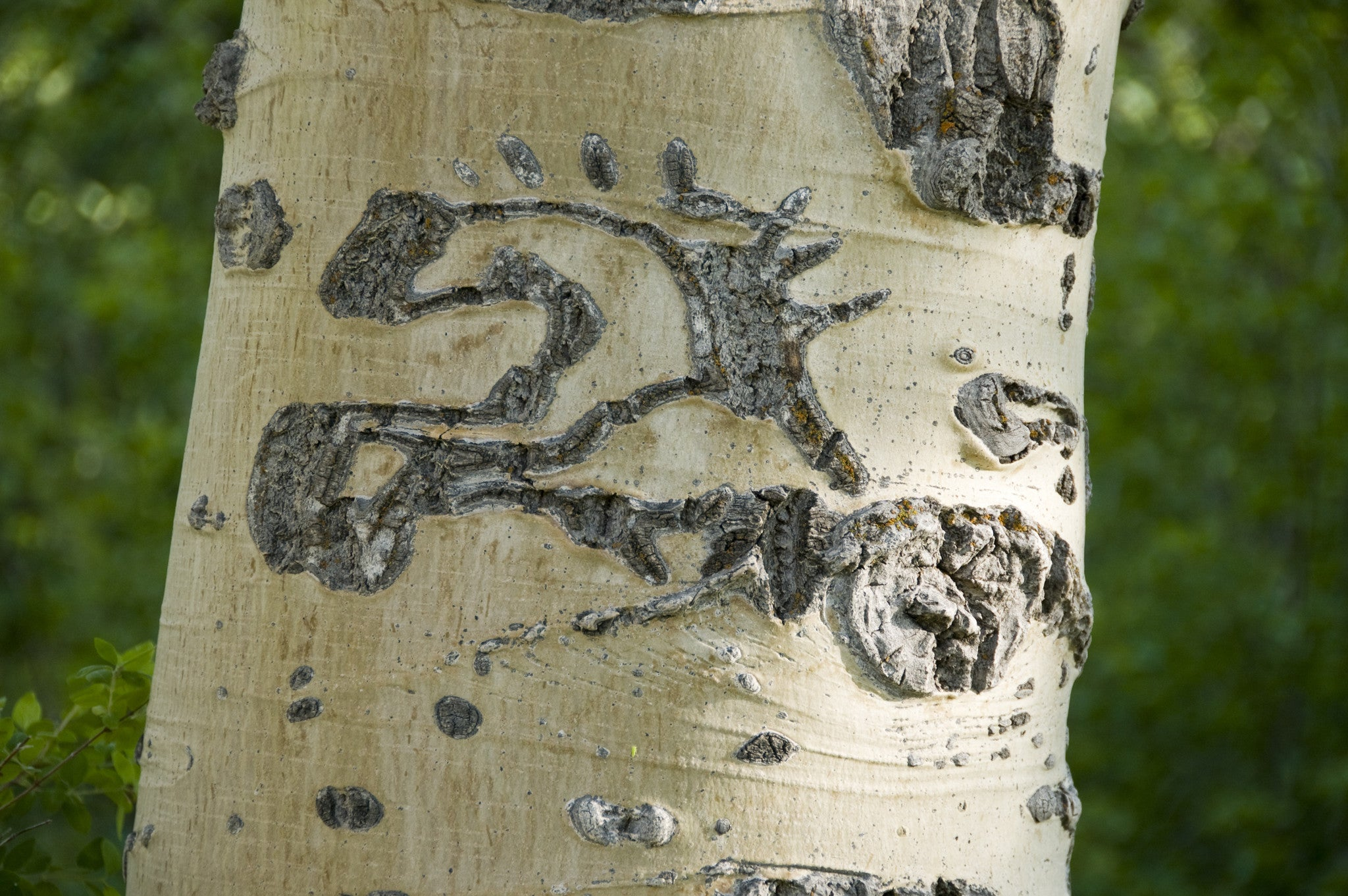 Basque Tree Carving