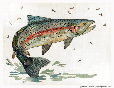 Rainbow Trout II  | Archival Print