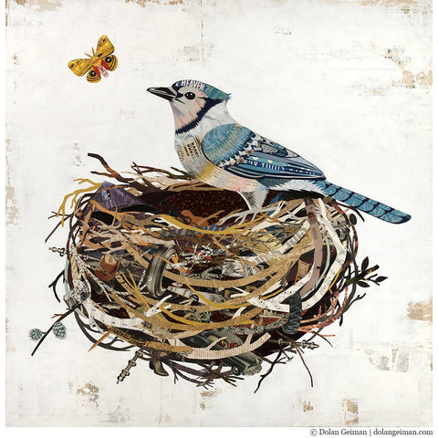 Blue Jay in Nest | Archival Print