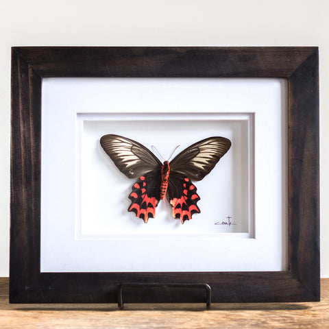 Red & Cream Butterfly | 12x10""