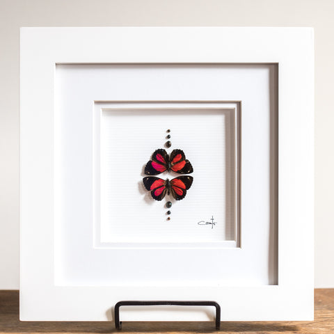 Red Butterfly Duo | 10x10""