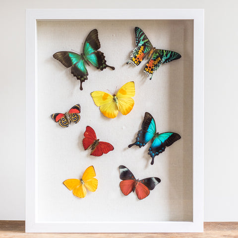 Flying Butterflies on Linen | 12x15""