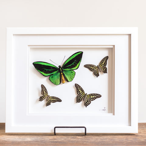 Green Butterflies in Flight | 15x12""