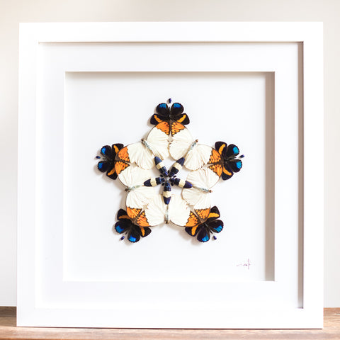 Kaleidoscope Butterflies & Beetles | 19x19""