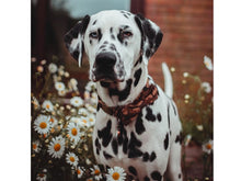 Load image into Gallery viewer, Unique Style Paws Collar Camouflage