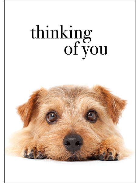 Affirmations Animal Card - Thinking of You