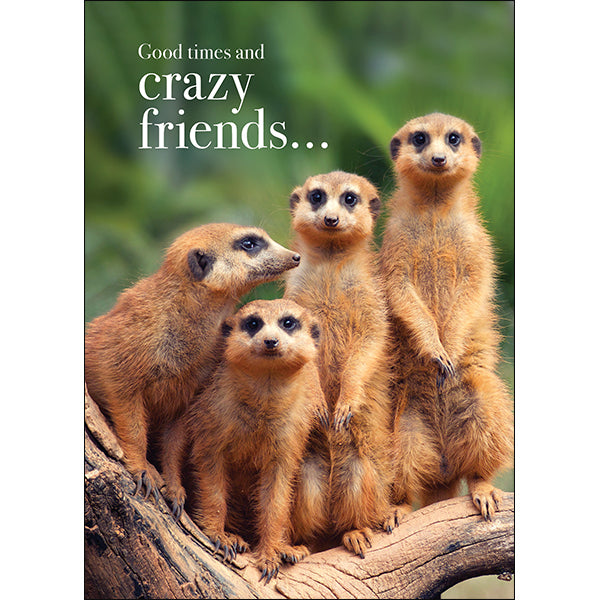 Affirmations Animal Card - Good Times and Crazy Friends