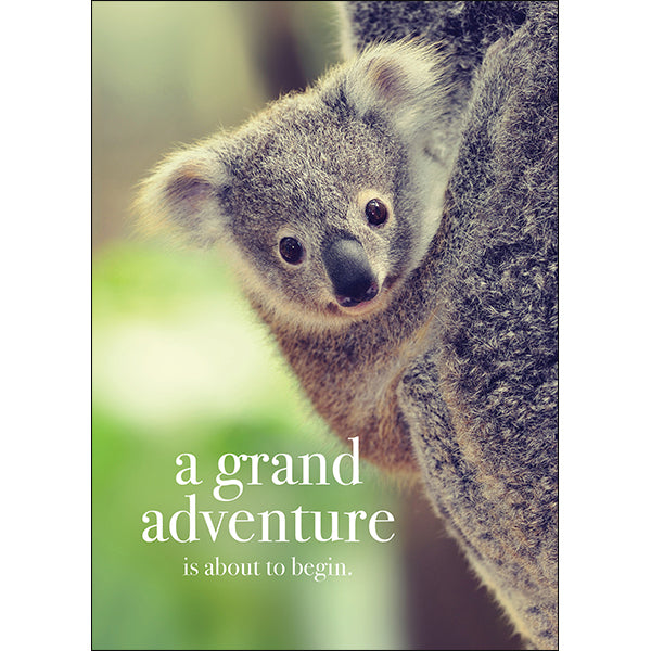 Affirmations Animal Card - A Grand Adventure