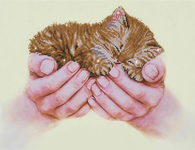 Precious Kitten - 52x40cm - Diamond Dotz