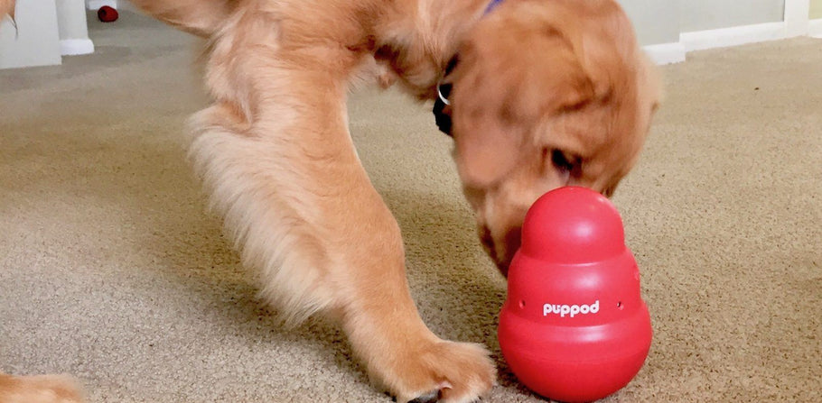 Top Tips for PupPod Success