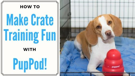 How to Make Crate Training Fun with PupPod!