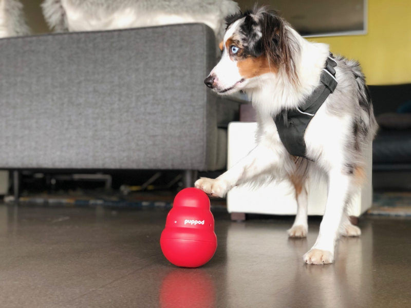PupPod Raises $772K Seed Funding, Announces Strategic Relationship with The Company of Animals