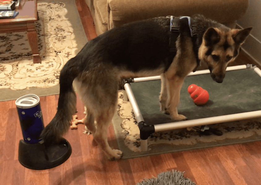 Meeting the Enrichment Needs of a Reactive Shepherd