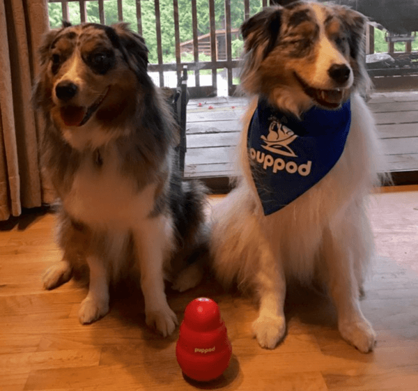 Blind Dogs Need Smart Toys Too