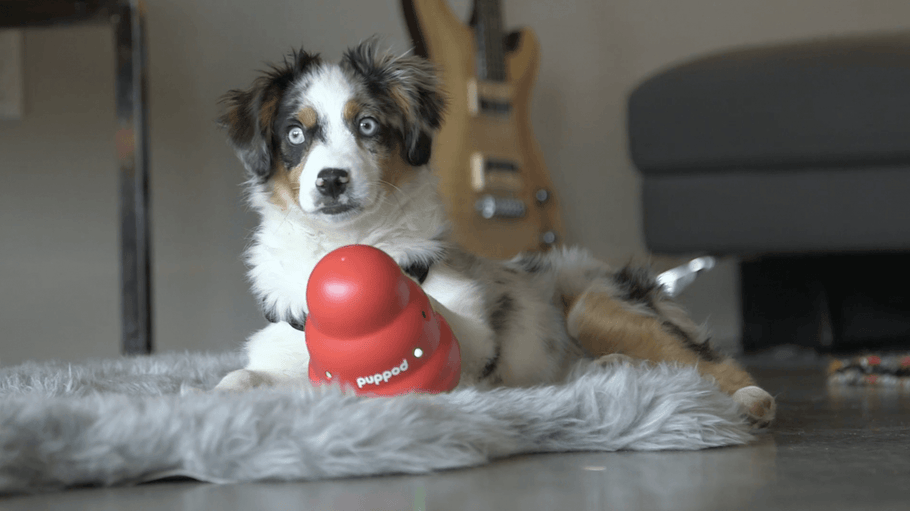 A Smart Dog Toy That Beats Boredom