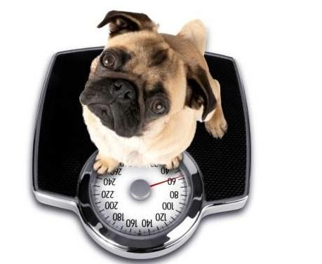 Will my dog gain weight?