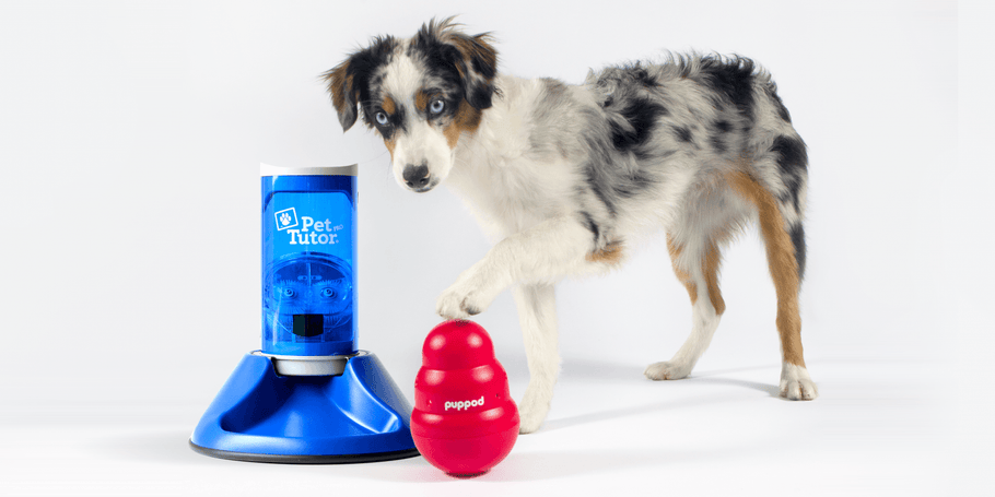 PupPod & Pet Tutor Bundle: Ready, Set, PLAY!