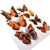3D Butterfly Stickers Art Craft