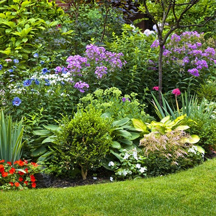 Shrubs & Perennials