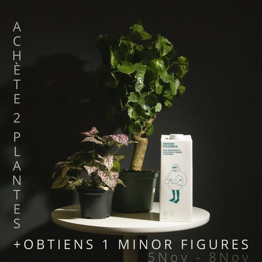 Buy 2 Plants and Get 1 Carton of Minor Figures Oat Milk FREE