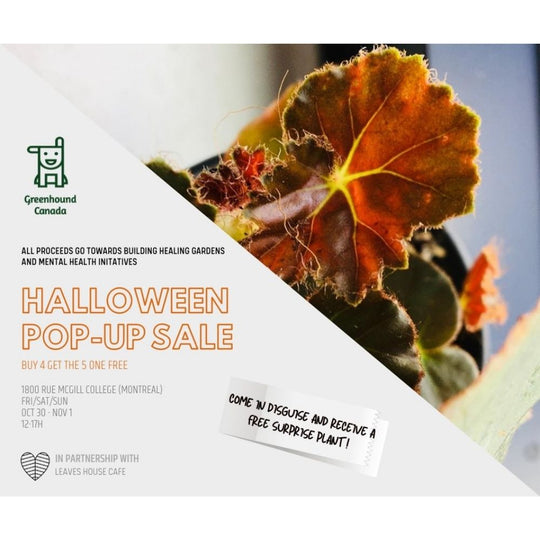 Huge Halloween Pop-Up Plant Sale!