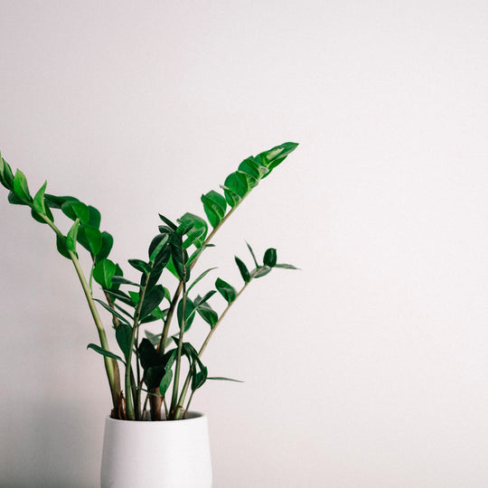 The Perfect Plants For First Time Plant Parents
