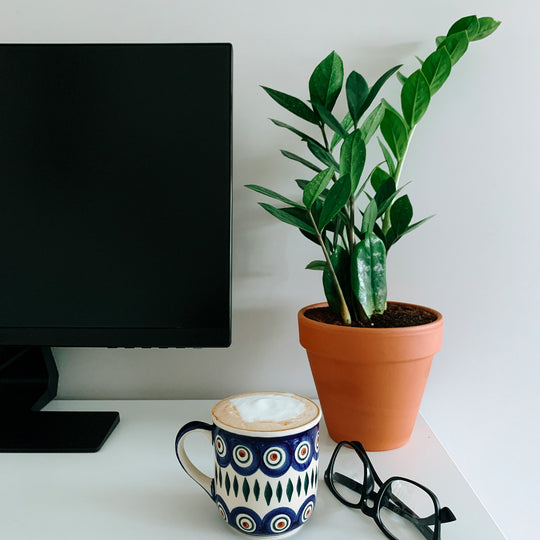 Low-Light Plants Perfect for any Office Space