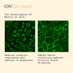 ION*Gut Health for Kids | Promotes Digestive Wellness, Strengthens Immune Function, Alleviates Gluten Sensitivity, Enhances Mental Clarity (Member Discount)