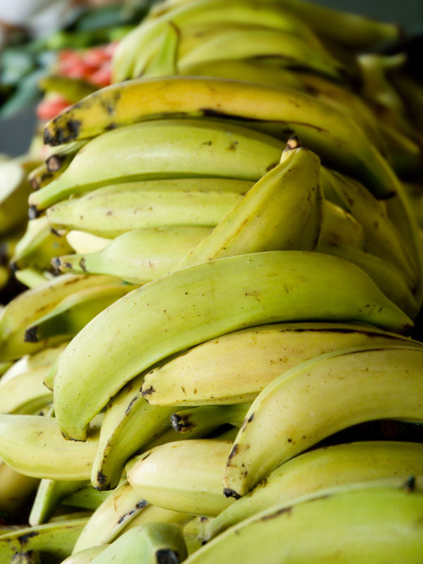 Tips for Picking Plantains