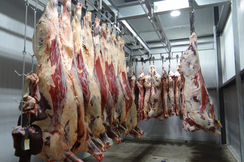 sides of beef hanging in a walk in cold room